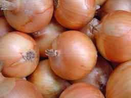 Семена лука чернушки Халцедон - фото 2