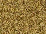 Семена люцерны опт/розница. - фото 2