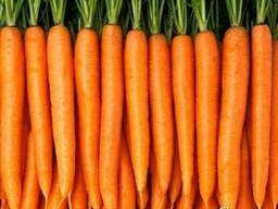 Семена морковки