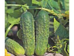 Услуги по фасовке семян и жидких удобрений