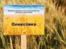 Семена озимой пшеницы Алексеевка, R2