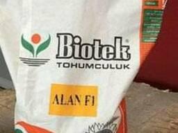 Семена подсолнечника Алан (Турция)