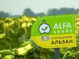 Семена подсолнечника Альзан (Альфа Сидс)