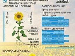 Семена подсолнечника Антей (гранстароустойчивый)