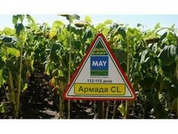 Семена подсолнечника Армада КЛ под евролайтинг Clearfield