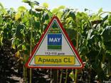 Семена подсолнечника Армада КЛ (устойчив к Евро Лайтингу) - фото 1