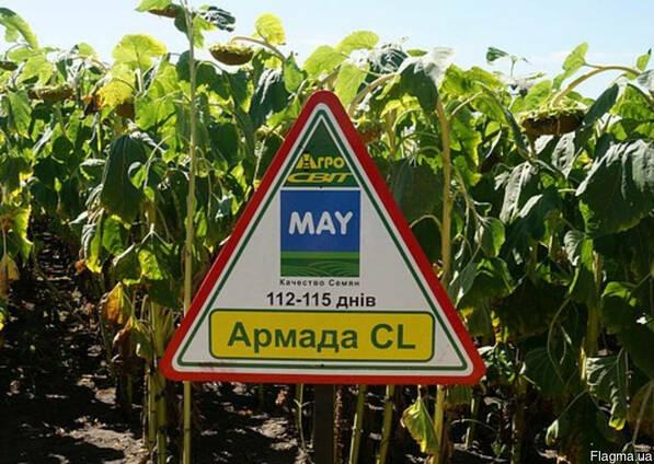Семена подсолнечника Армада КЛ (устойчив к Евро Лайтингу)