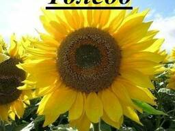 Семена подсолнечника Барса, Толедо под гранстар 50гр выдер.