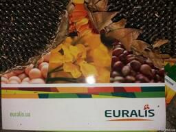 Семена подсолнечника ЕС Флоримис под Евролайтнинг, 111 дней