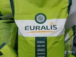 Семена подсолнечника Евралис Белла Euralis ЕС БЕЛЛА оригинал