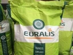 Семена подсолнечника Евралис Белла купить. Семена подсолнечн
