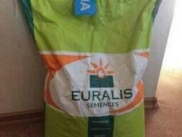 Семена подсолнечника (Евралис) ЕС Белла укр. 2015 г.