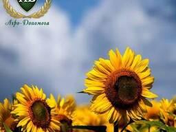 Семена подсолнечника Флорими