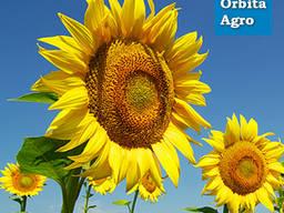 Семена подсолнечника Карлос 105 Стандарт