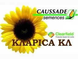 Семена подсолнечника Кларисса КЛ (Klarika CL)Caussade-Semenc