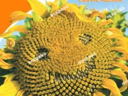 Семена подсолнечника Лакомка 1репродукция