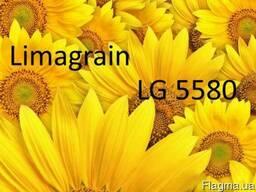 Семена подсолнечника ЛГ 5580 (Новая Тунка) Лимагрейн