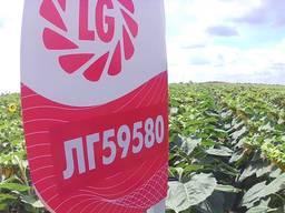 Семена подсолнечника Лимагрейн 59580 A-G под Экспрес
