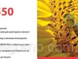 Семена подсолнечника (Лимагрейн) LG 5550 Франция 2015 г.