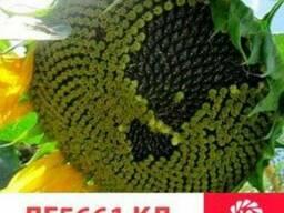 Семена подсолнечника Лимагрейн под Евролайтинг LG 5661CL(A-G