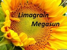 Семена подсолнечника Мегасан Лимагрейн