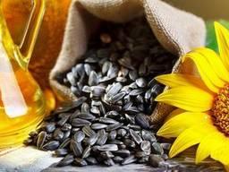 Семена подсолнечника – НС Х 187 (NS H 187)