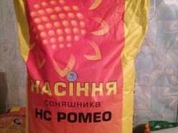 Семена подсолнечника НС Ромео (Нертус Агро)