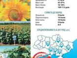 Семена подсолнечника НС Таурус (Евро-лайтнинг) - photo 2
