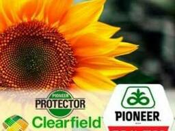 Семена подсолнечника П64ЛЦ108 (P64LC108) от Пионер (Pioner)