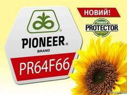 Семена подсолнечника Pioneer Пионер PR64F66 пр64ф66 круизер