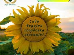 Семена подсолнечника Сады Украины