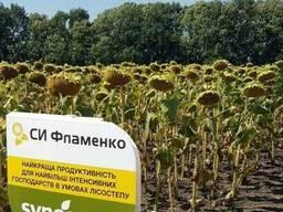 Семена подсолнечника СИ Фламенко (Syngenta)