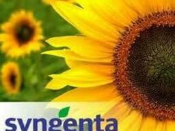 Семена подсолнечника Сингента Syngenta