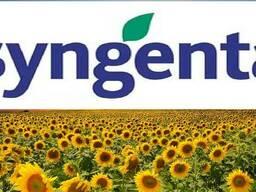 Семена подсолнечника Сингента (Syngenta) Евро-Лайтинг.