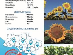 Семена подсолнечника Златибор, Таурус, НС Х 2652