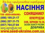 Продам семена подсолнечника F1 - фото 2