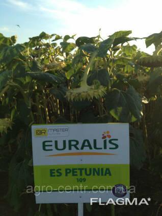 Семена подсолнуха ЕС Петуния, Евралис
