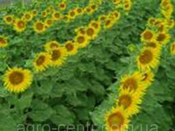 Семена подсолнуха Лимит (под Евролайтинг )