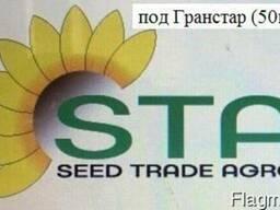 Семена подсолнуха под Гранстар(50г/га) НС-Х-1749 и НС-Х-7370