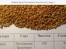 Семена проса Полтавское Золотистое (1 репр. )