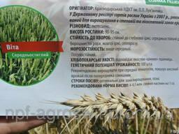 Семена пшеницы озимой Вита от производителя
