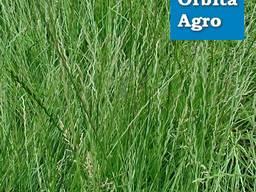 Семена райграса (многоукосный) нет в наличии