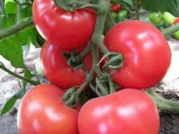 Семена розового томата KS 14 F1 (Китано)