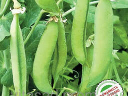 Семена сахарного (овощевой) гороха Скинадо 16грн/кг