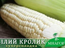 Семена сахарной кукуруза Белый Кролик, среднеспелая 1000 с.