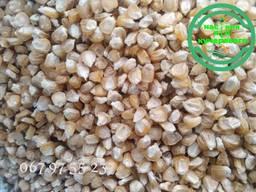 Семена сахарной кукурузы