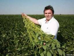 Семена сои лучшие в Украине