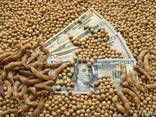 Семена сои трансгенный сорт Kansas ГМО - фото 3