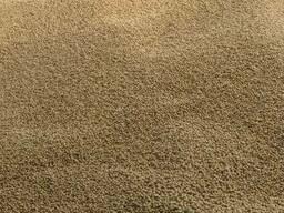 Семена сои Валюта (гмо)