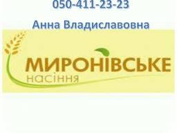 Семена ярового ячменя 1р. /эл